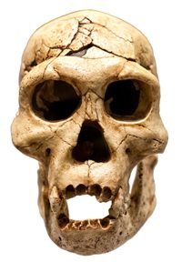 2 Reincarnation Skull Murderer Reincarnation Evidence