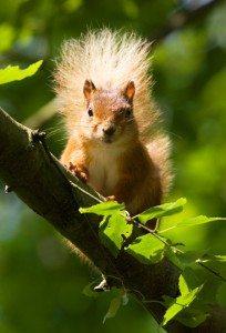 5 IISIS Animal Reincarnation Squirrel Tree